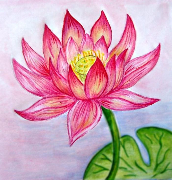 große blume, zeichnen für anfänger, rosa lotus, großes grünes blatt, lotusblume