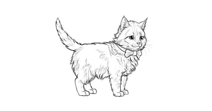 zeichnen für anfänger, katze mit langen haaren und fliege, kleines tier, haustier