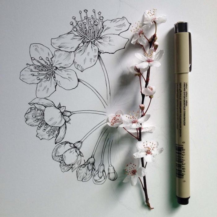 schwarzer bleistift, weiße kirschblüten, zeichnen für anfänger, dünner zweig