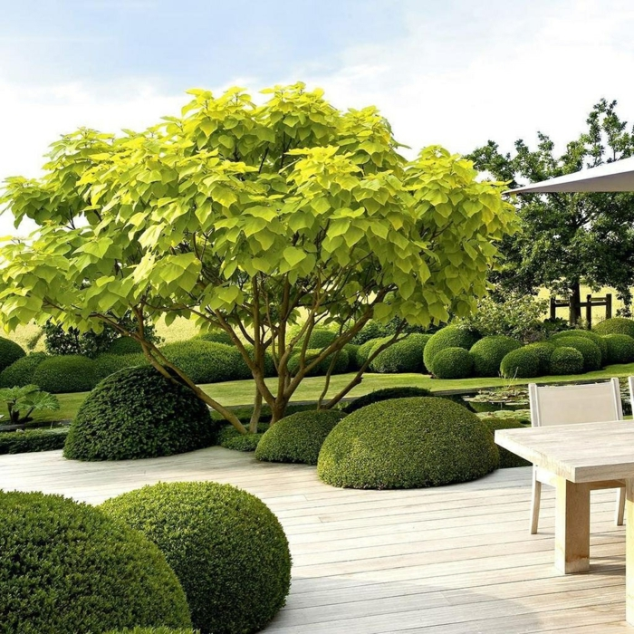 grüner Baum und gerundete Hecke, Terrassendiele und ein englischer Rasen, moderne Gartengestaltung