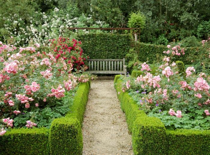 eine niedrige Hecke, ein Pfad, eine Bank in der Ferne, rosa und rote Blumen, Garten Ideen