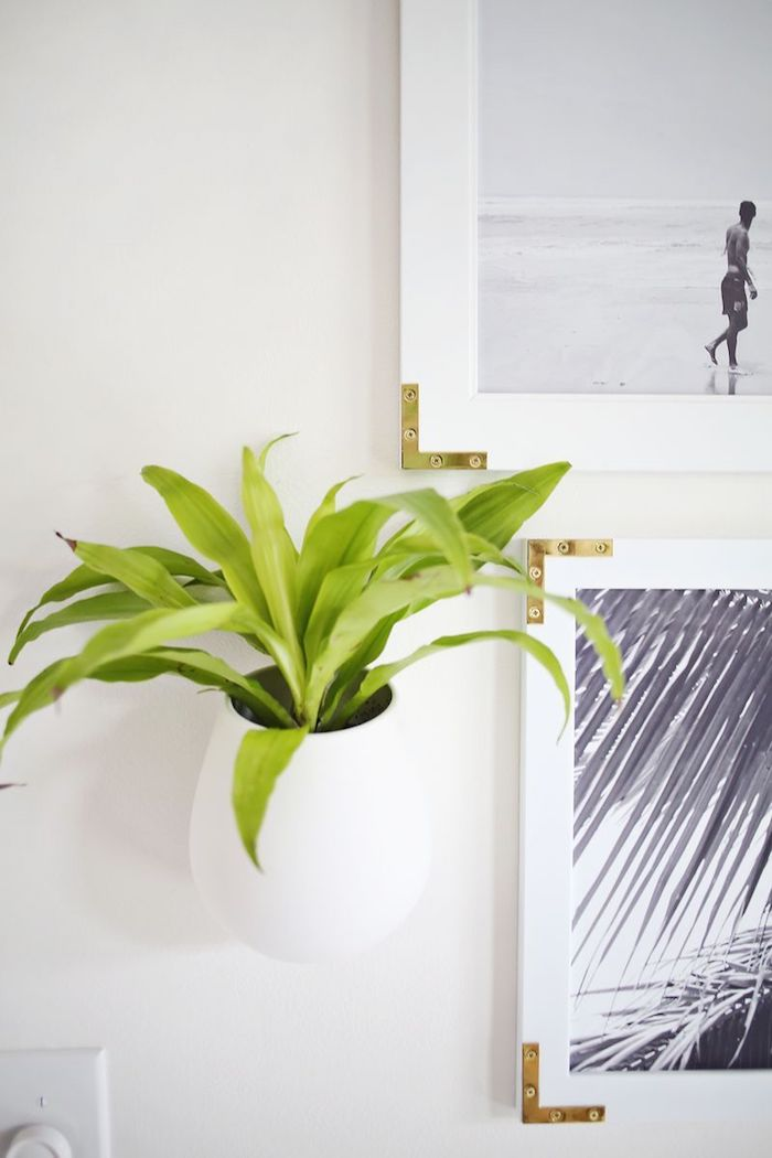 Wanddeko Ideen, weißer Blumentopf an der Wand, grüne Pflanze darin, weiße Bilderrahmen mit goldenen Ecken