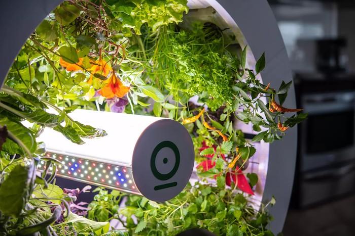 ein indoor garden mit einem großen weißen rad mit einer LED Lichtquelle und mkt vielen grünen pflanten, OGarden Smart