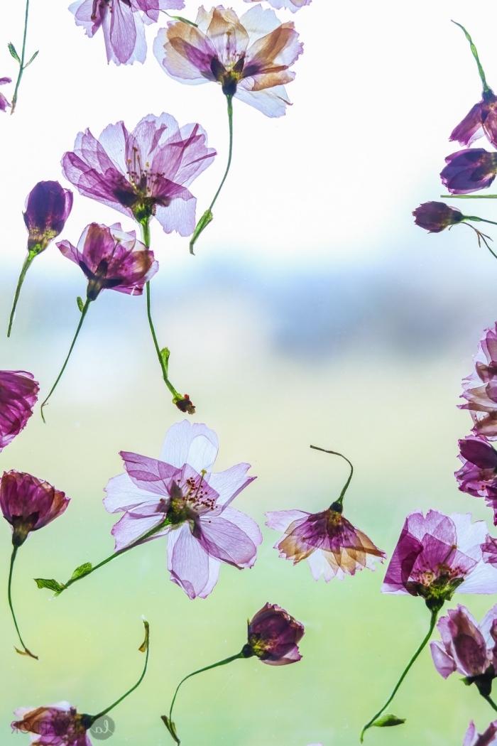 basteln mit kindern unter 3, transparante bilder dekoriert mit kleine frühlingsblumen, diy anleitung