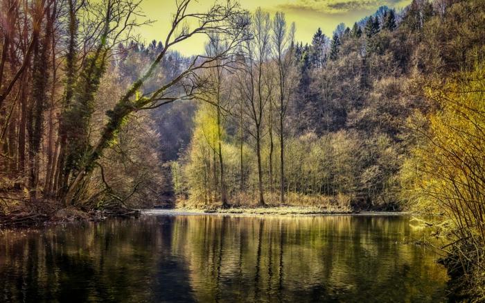ein See und schöne Natur, schöne Profilbilder, Nadelbäume, glätzendes Wasser, grünes Himmel