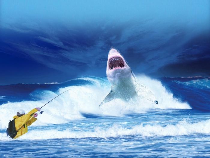 ein Mensch mit Angler hat bereit einen Haifisch im Ozean gefangen, unique Bilder, blauer Himmer, blaues Wasser