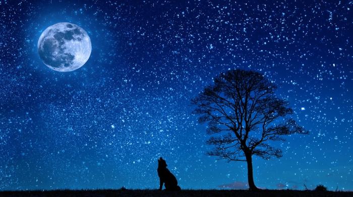 ein nächtlicher Himmel mit großem Mond, ein Wolf, ein Baum, viele Sterne, Bilder modern