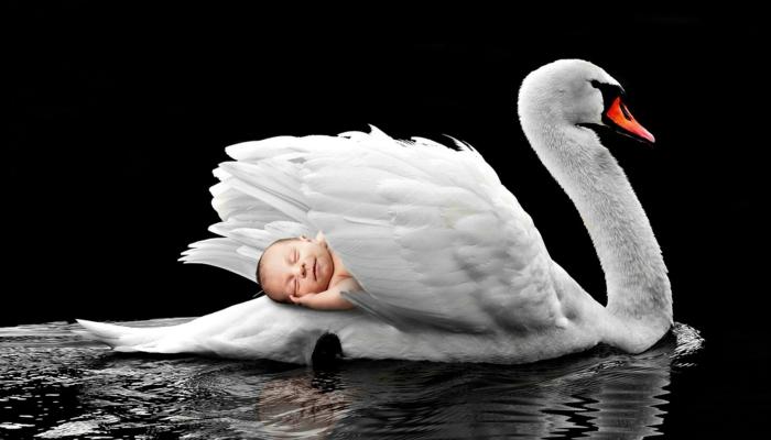 ein Schwan und ein Baby, das schläft auf seinem Rücken, coole Bilder aus einem japanischen Märchen