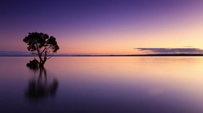 eine Landschaft mit klarem Wasser und ein Baum, ein Sonnenaufgang, eine Wolke, Bilder modern