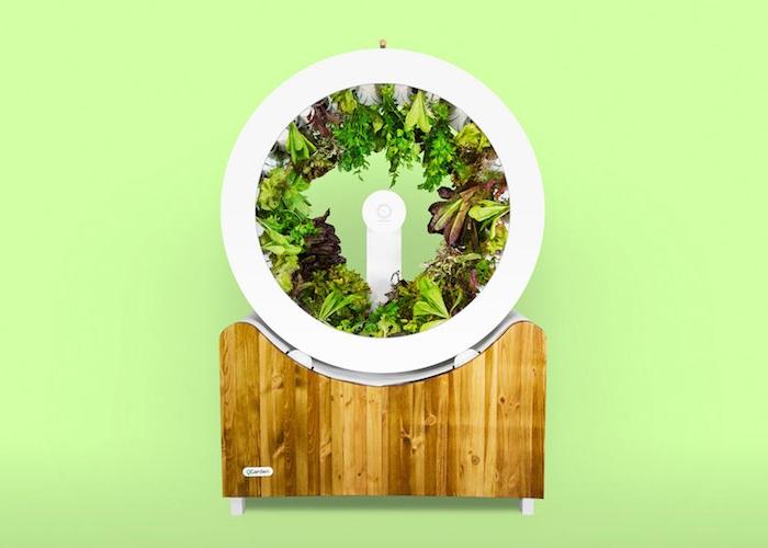 das OGarden Smart Sastem, ein indoor Garten mit einem großen weißen rad und mit grünen pflanzen mit grünen blättern