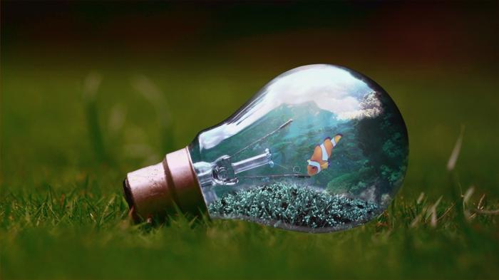 ein Bild mit Glühbirne, ein Aquarium in der Glühbirne auf einer Wiese, Kunst Bilder, ein Clown Fisch