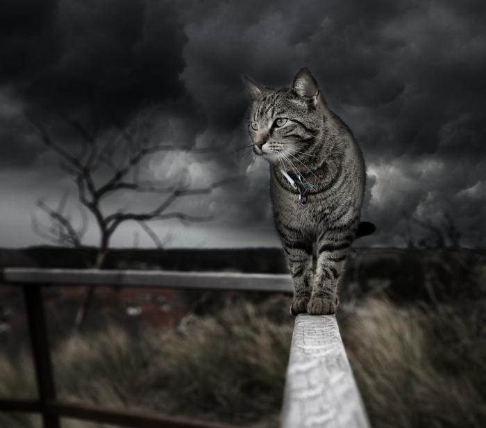 eine Katze auf einem Zaun, Himmel, wie vor Sturm, Kunst Bilder von einer netten Katze