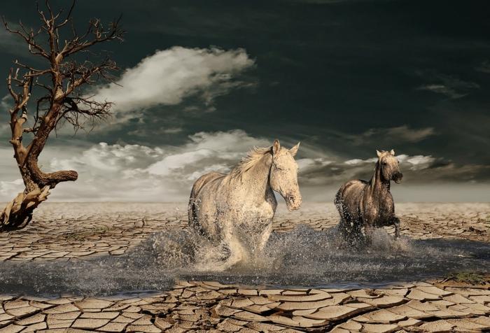 zwei Pferde, die in Wasser rennen, aber eigentlich sind sie in der Wüste, tolle Bilder, die unrealistisch wirken