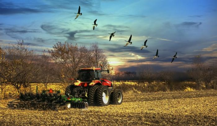 ein Vogelschwarm, der in gerade Linie fliegt, eine Szene auf dem Land, unique Bilder