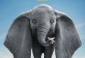 Ab heute in den Kinos: Elefant Dumbo ist zurück