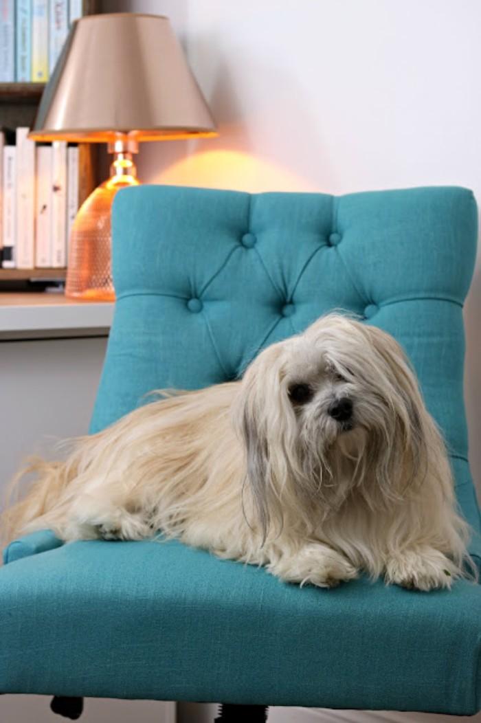 Gartenhaus Flachdach, alle zu Hause mögen die neue Konstruktion im Garten, ein Hund liegt auf einem blauen Stuhl