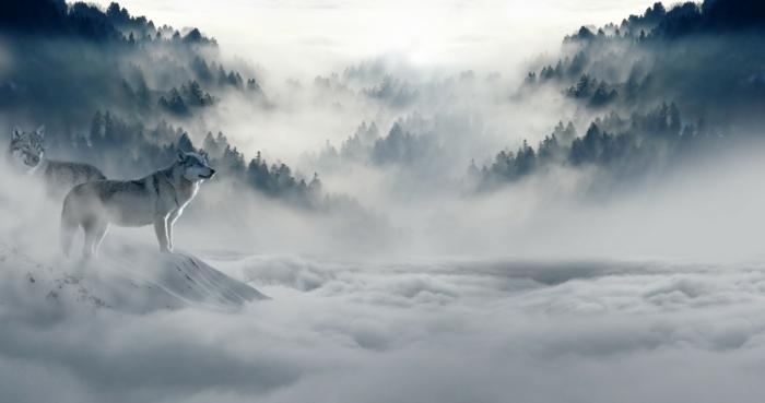 Wölfe im Wald, eine Landschaft von Nebel umhüllt, große Nadelbäume, hübsche Bilder