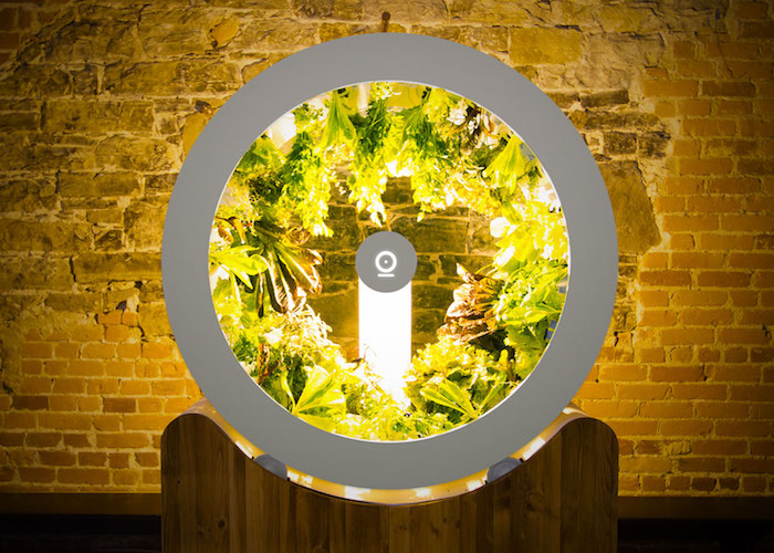 indoor-garten mit einem grpßen weißen rad und einer LED lichtquelle und vielen grünen pflanzen