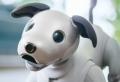 Sony stellt eine neue Funktion von Aibo Roboter Hund vor