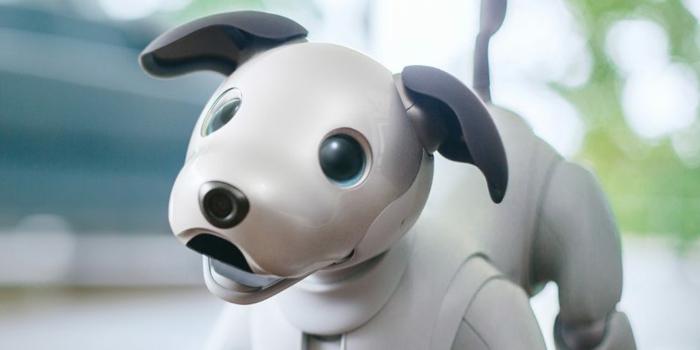 Roboter Hund mit blauen Augen, schwarze Ohren, weißer Körper, Aibo neues Modell