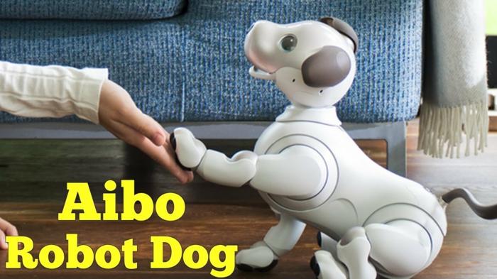 ein Hund in weißer Farbe mit blauen Augen im Haus, gibt die Pfote