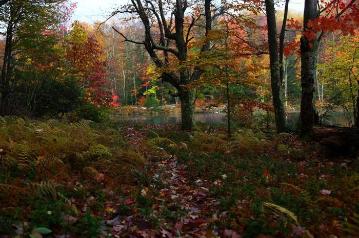 ein herbstliches Bild mit vielen Laub und viele Farben, ein Landschaftsbild, hübsche Bilder