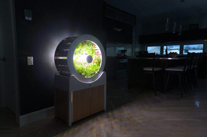zimmer mit grauen und schwarzen wänden und einem indoor garten mit einem weißen rad und grünen pflanzen und einer LED Lichtquelle