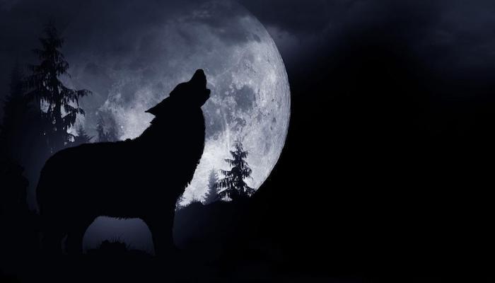 wald mit schwarzen bäumen und ein großer heulender schwarzer wolf, ein großer weißer vollmond