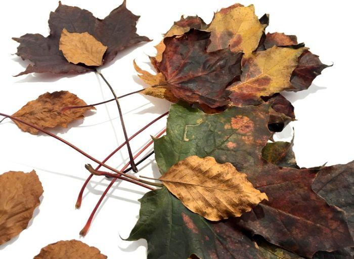 pinterest herbstdeko idee natürliche deko, blatt vom baum, bunte farben