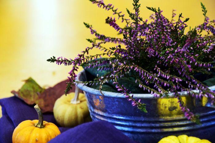herbst dekoration. deko ideen zum inspirieren, mini kürbis als deko, lavendel