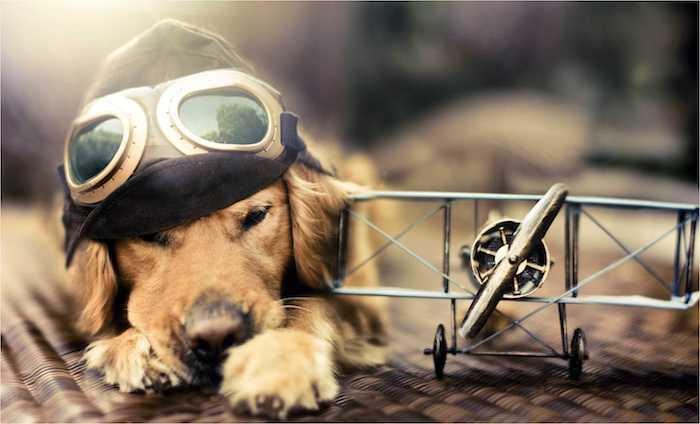 flugzeug und ein hund