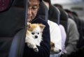 Reisen mit Haustieren – wie kann man sein Haustier auf eine Flugreise vorbereiten?