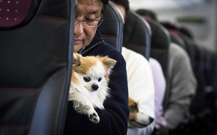 kleiner hund im flugzeug