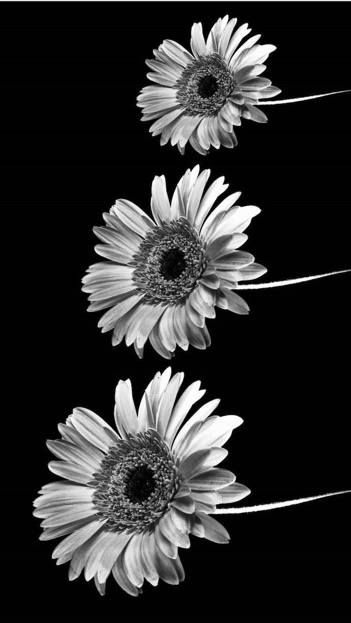tumbl bilder mädchen ideen für frauen und mädels, schwarze farbe mit drei weißen gerbera blumen