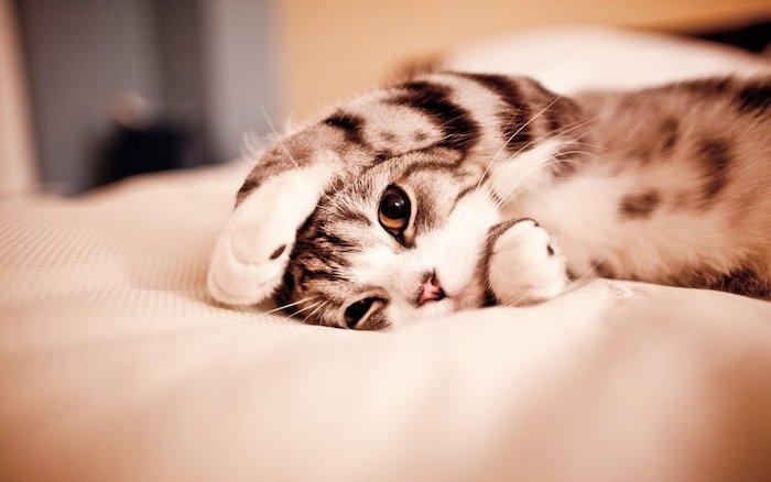 tumbl bilder mädchen, eine katze ist das mädchenhafte bildschirm, das sie haben können
