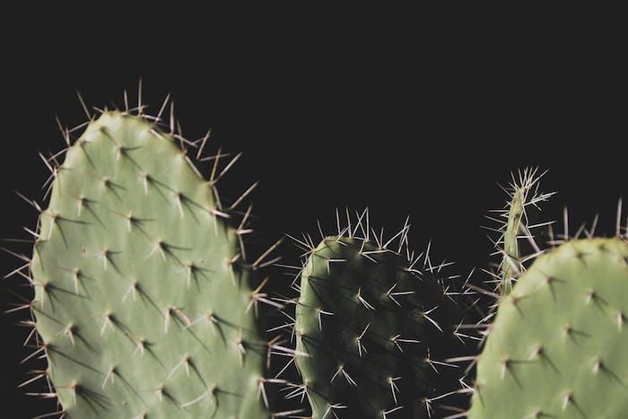 tumbl bilder mädchen, kaktus blumen, pflanzen bildschirmfoto, schwarz und grün beruhigend für augen