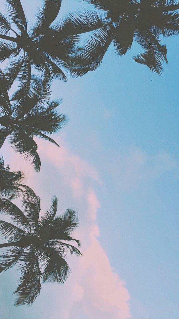 pinterest wallpaper, ein foto von palmen, blauem himmel und rosaroten wolken, traumurlaub