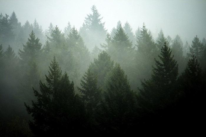 pinterest wallpaper, foto von einem wald, viele bäume und nebel
