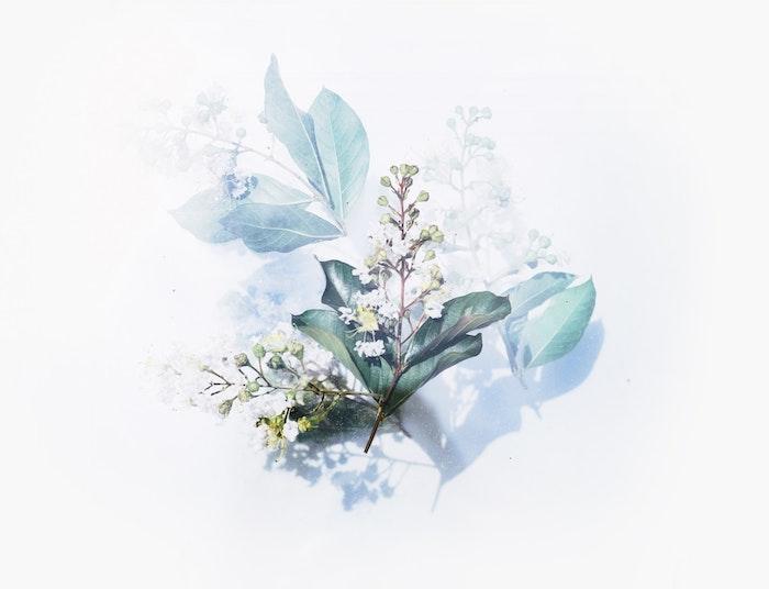tumblr wallpaper ideen in dezenter gestaltung, weiß und blau bild von einer pflanze