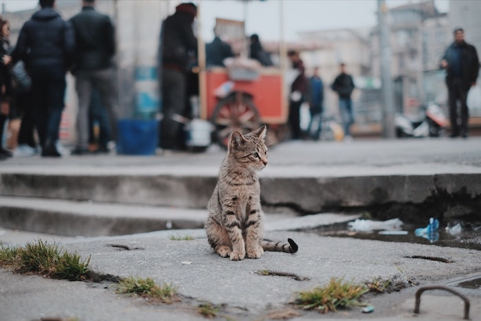pinterest hintegründe, eine liebe katze sitzt auf dem boden und schaut etwas an