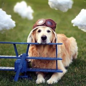 Reisen mit Haustieren - wie kann man sein Haustier auf eine Flugreise vorbereiten?