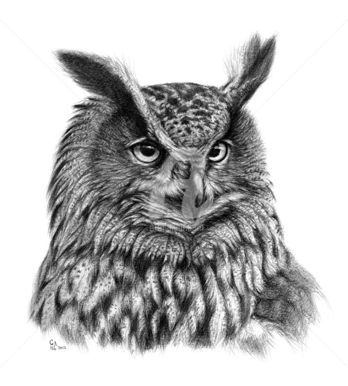 bilder selber malen, realitische zeichnung, eule zeichnen, großer detaillierter vogel