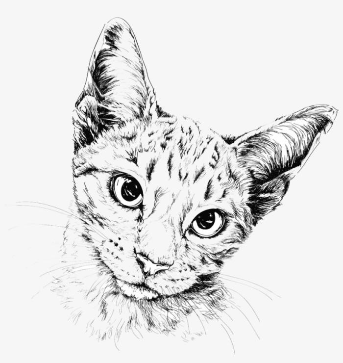 bilder zum malen, katze zeichnen, realtiische zeichnung in schwarz und grau, schwarze augen
