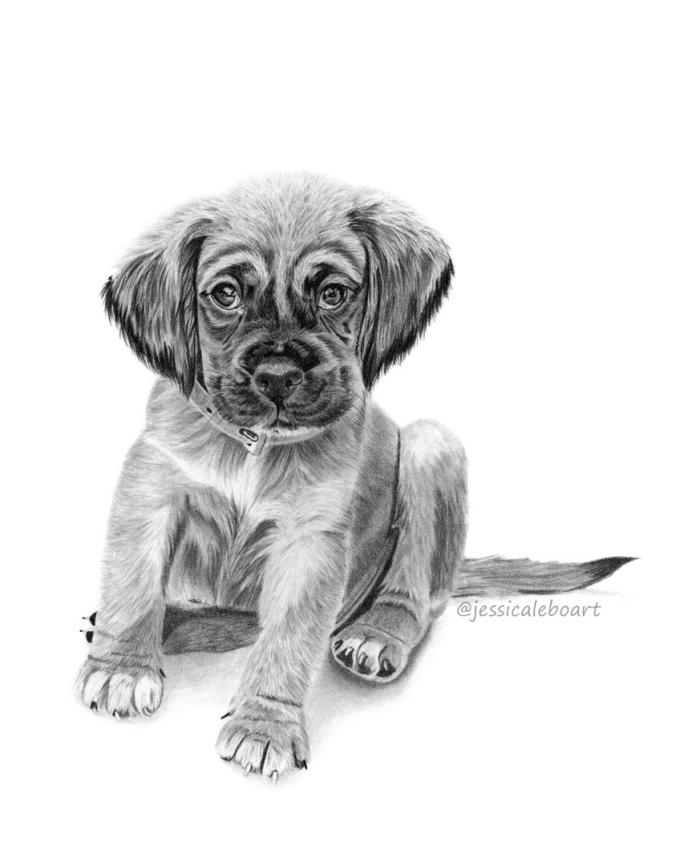 bilder zum malen, kleiner hund, realitische zeichnung in schwarz und grau, bilder selber zeichnen