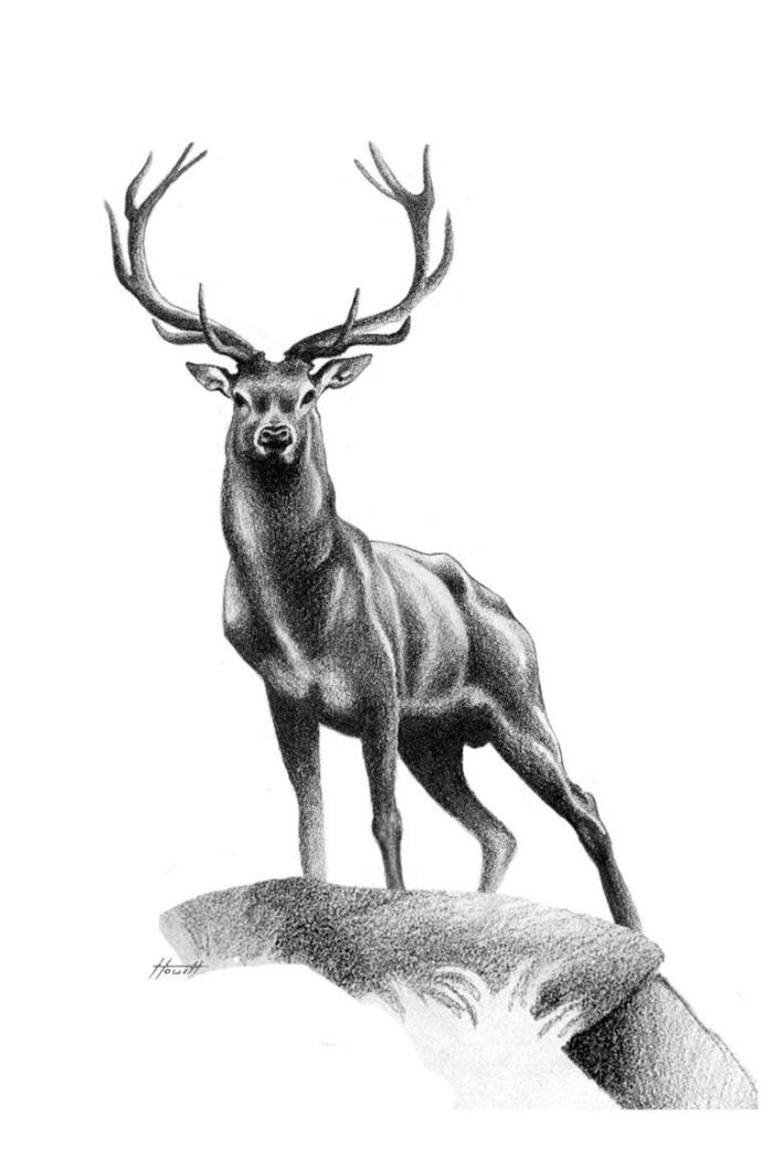 hirshc zeichnen, realitische zeichnung ins schwarz und grau, bilder zum nachzeichnen, tier