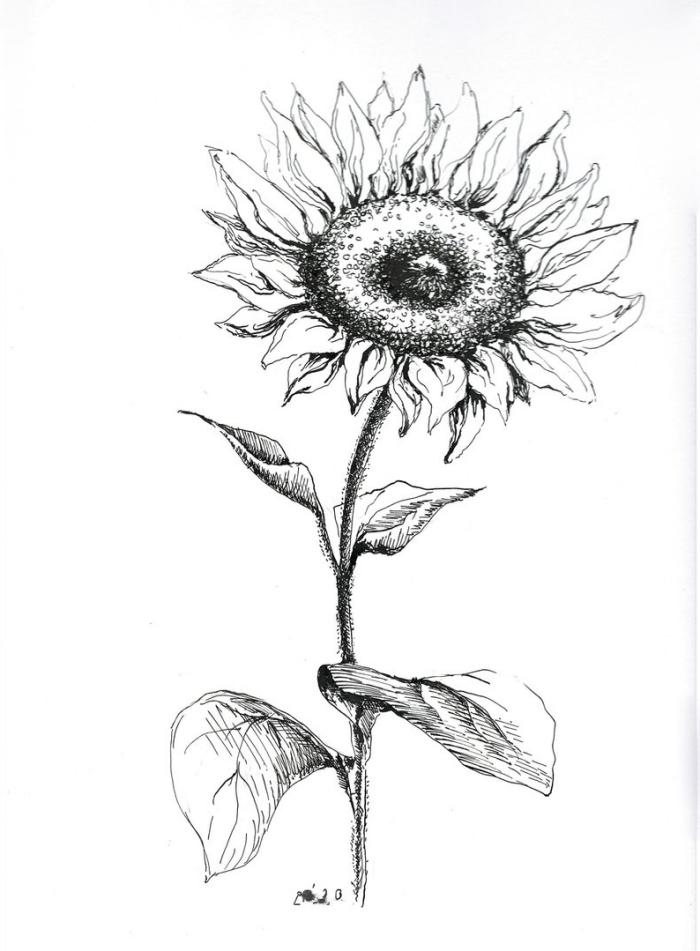 große blume in schwarz und grau, sonnenblume zeichnen, coole bilder zum nachzeichnen ideen