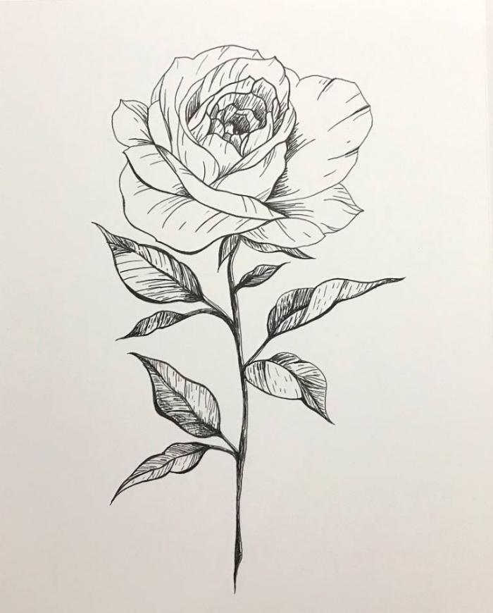rose zeichnen, blume in schwarz und grau, coole bilder zum zeichnen, zeichnungen ideen