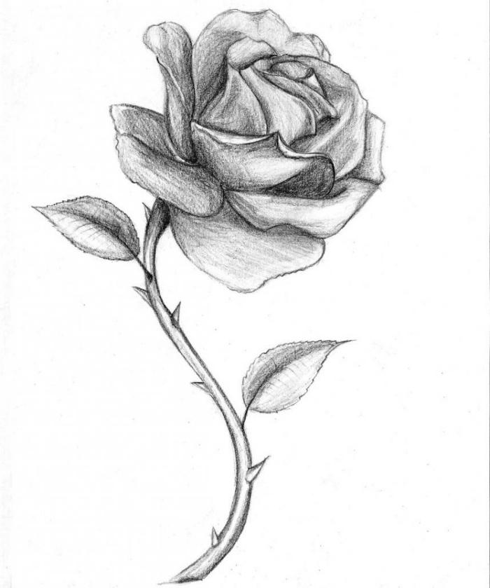 einfache bilder zum nachmalen, rosa mit dornen, schwarz graue zeichnung, blume