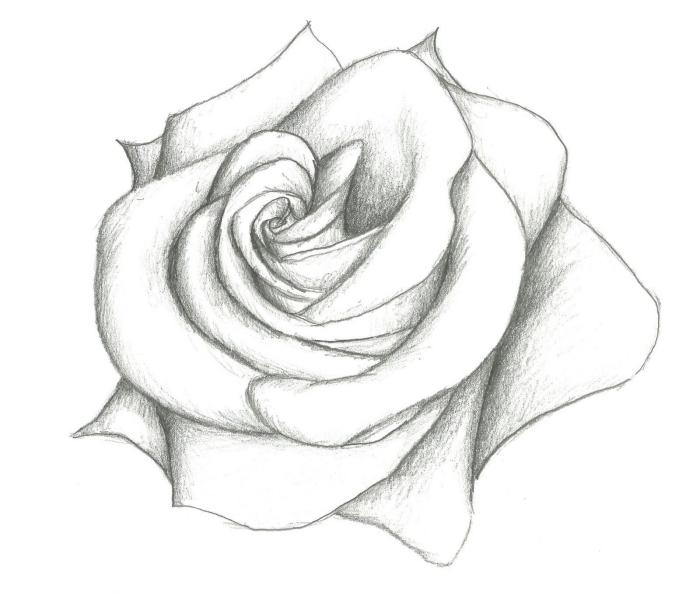 schöne bilder zum malen, weiße rose zeichnen, realitische zeichnung, große blume