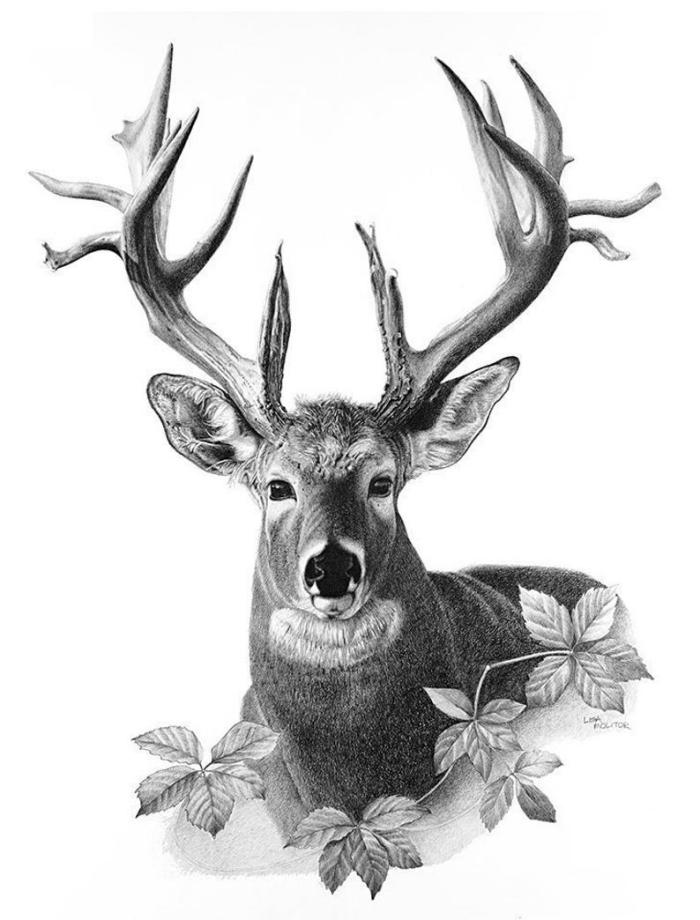 schöne bilder zum nachmalen, realitische schwarz graue zeichnung, hirsch mit baumblättern